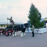 Harveys-Dray-Brighton-Pier
