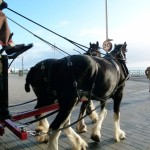 Harveys-Dray-Marine-Parade-3